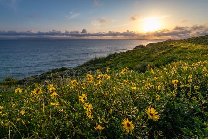 Toppen blom längs Catalina Trail arkivbild