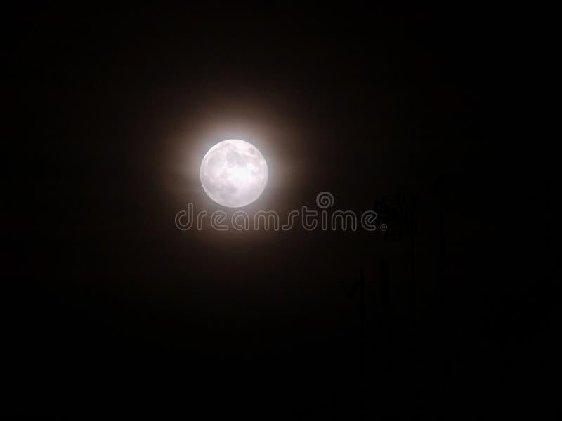 Toppen fullmåne, med dimma fotografering för bildbyråer