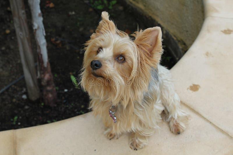 Toppen gullig hund royaltyfria foton