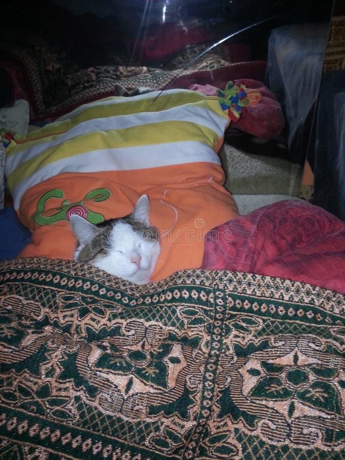 Toppen katt för snedstegkatt arkivbild