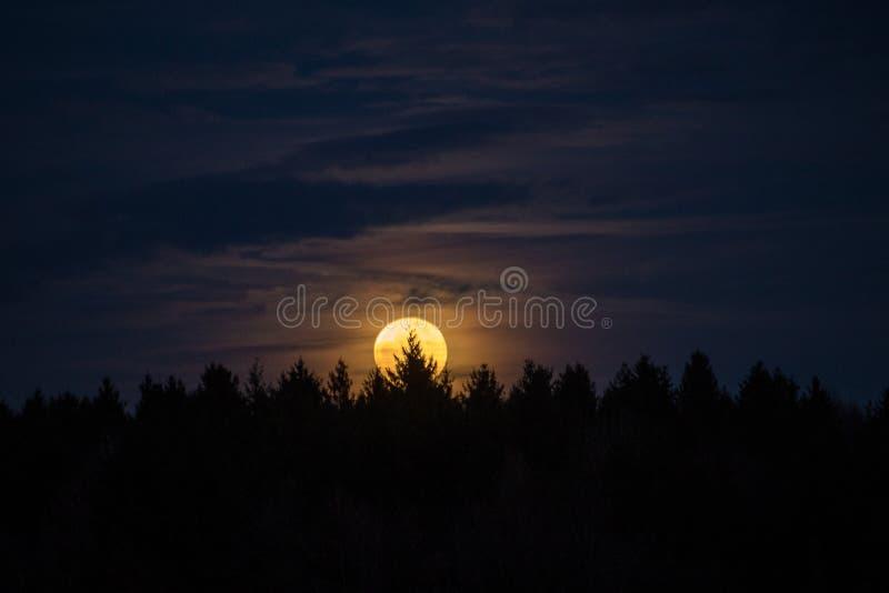 Toppen måneresning bak träd arkivfoto