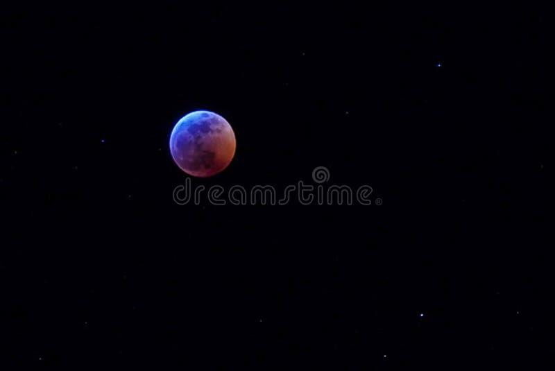 Toppet blod Wolf Moon i Januari arkivfoto