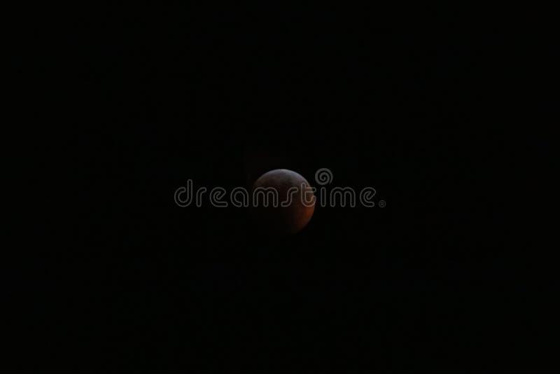Toppet blod Wolf Moon January 2019 2 royaltyfria bilder