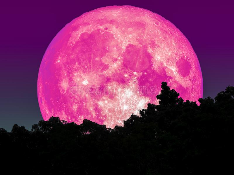 toppet fullt rosa måne- och konturträd i skogstjärna på himmel vektor illustrationer