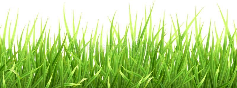 Toppet realistiskt vektorgräs arkivbild