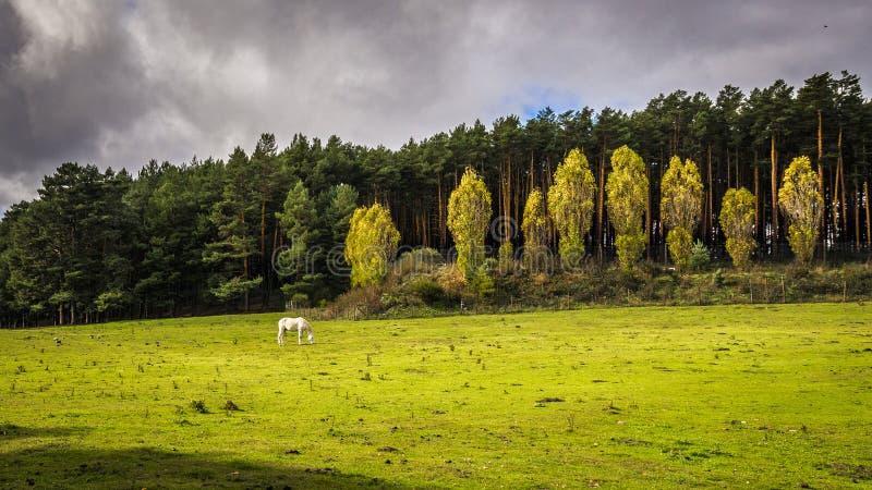 Toppig bergskedja de Gredos, landskap av Avila, Castile Leon fotografering för bildbyråer