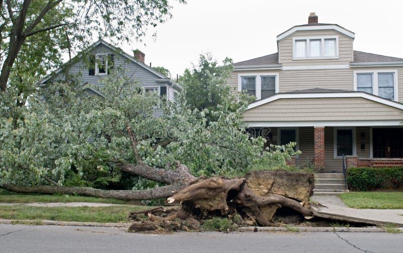 toppled tree arkivbilder