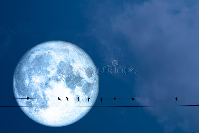 toppna fulla blå måne- och konturfåglar hänger på maktelkraft arkivfoto