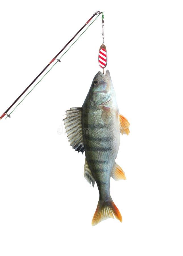 Toppositie op vissen-staaf royalty-vrije stock foto