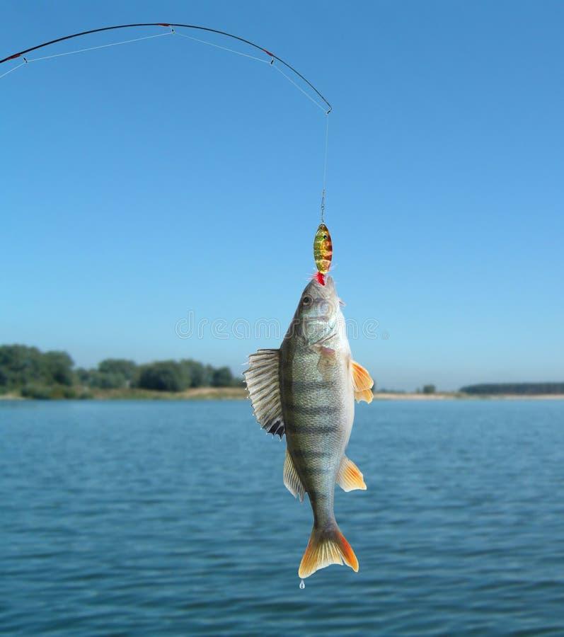 Toppositie op vissen-staaf stock foto
