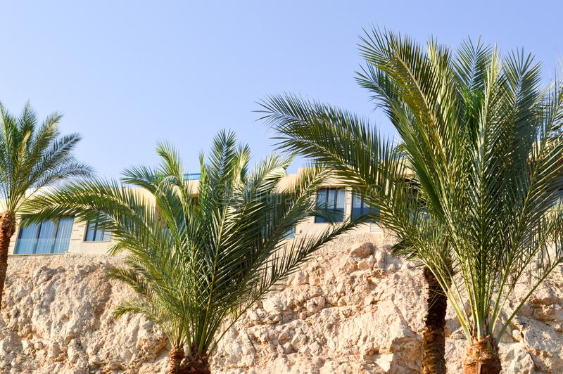 Tops of beautiful tropical palms with green branches against the background of windows and a steep sandy cliff against the blue sk royalty free stock photography