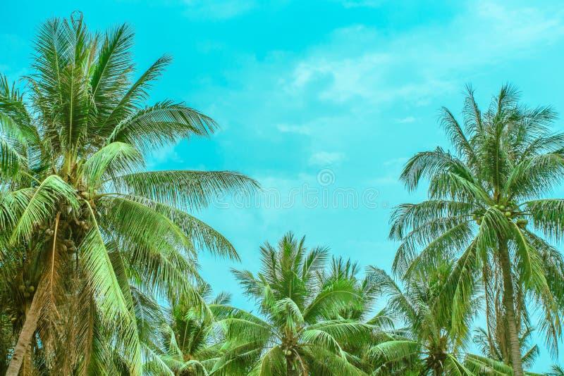 Tops de palmeras contra el cielo fotos de archivo