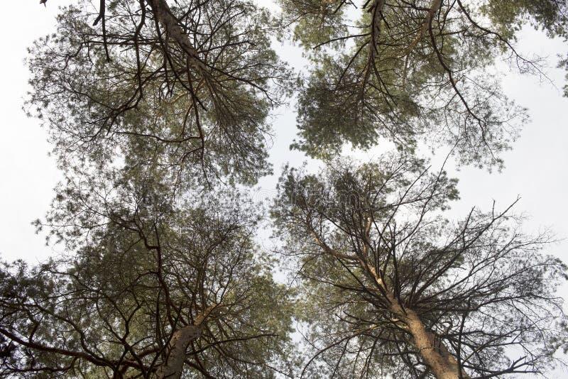 Download Tops del árbol imagen de archivo. Imagen de árbol, caída - 42433663