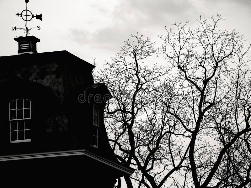 Tops del árbol fotos de archivo libres de regalías