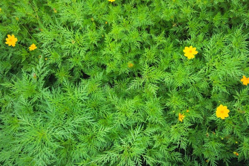 Topsicht auf tropische Blätter mit gelber Blume stockfotos