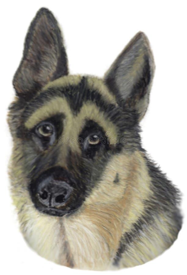 Topsy,我们的夫人德国牧羊犬 免版税库存照片