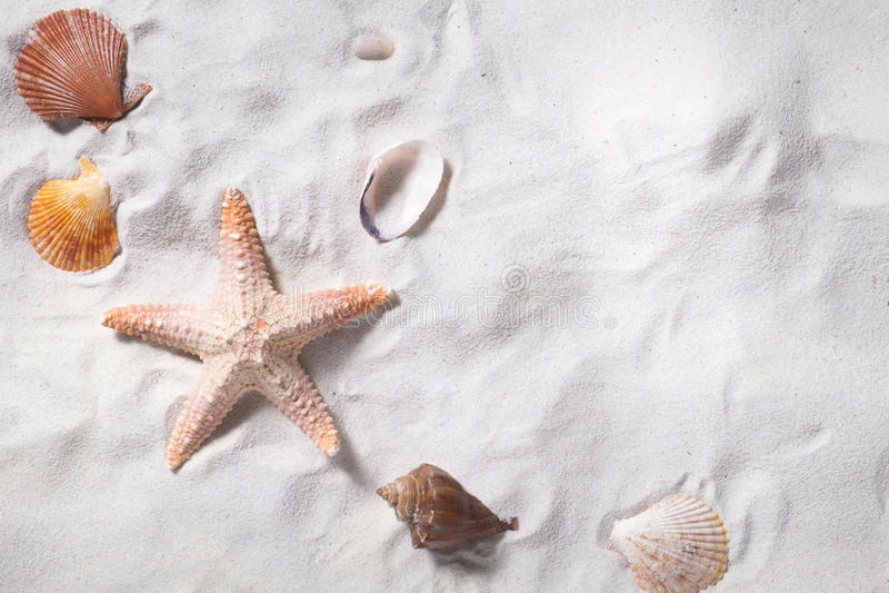 Topview των κοχυλιών θάλασσας με την παραλία άμμου ως υπόβαθρο και copyspace στοκ εικόνες