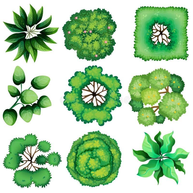 Topview листьев иллюстрация штока
