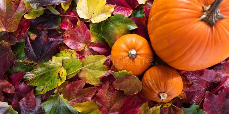 Topview on autumn decoration royalty free stock photos