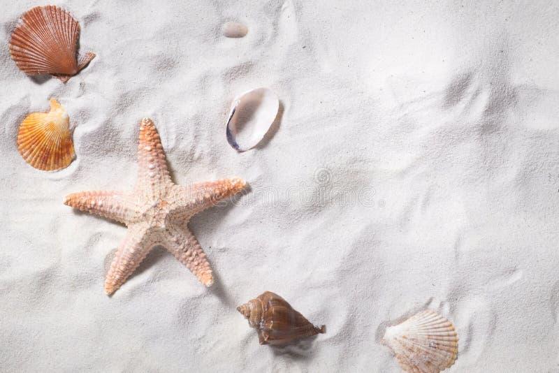 Topview de las cáscaras del mar con la playa de la arena como fondo y copyspace foto de archivo