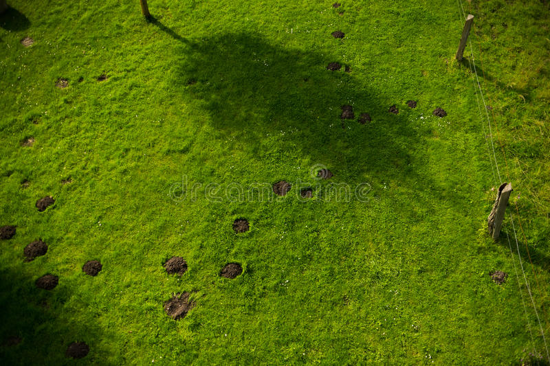 Topview of molehills in lawn royalty free stock photography