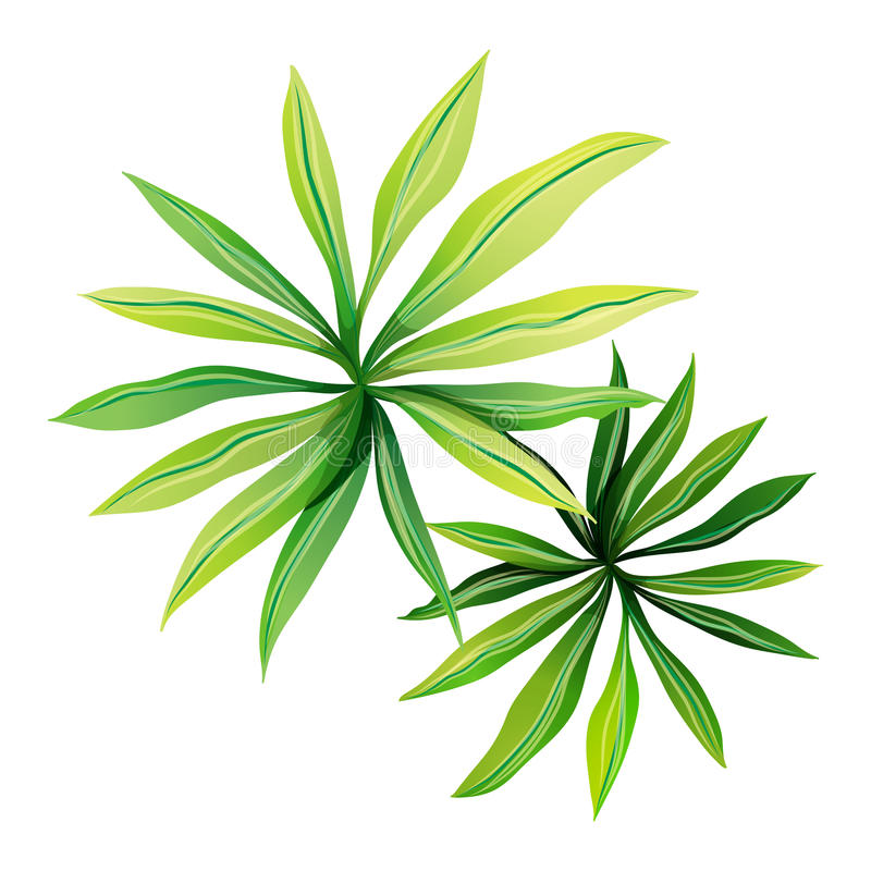 A topview of a plant with elongated leaves royalty free illustration