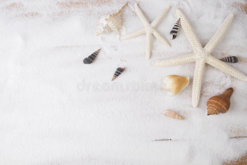 Topview sommarbakgrund Sandstrand med många snäckskal arkivfoton