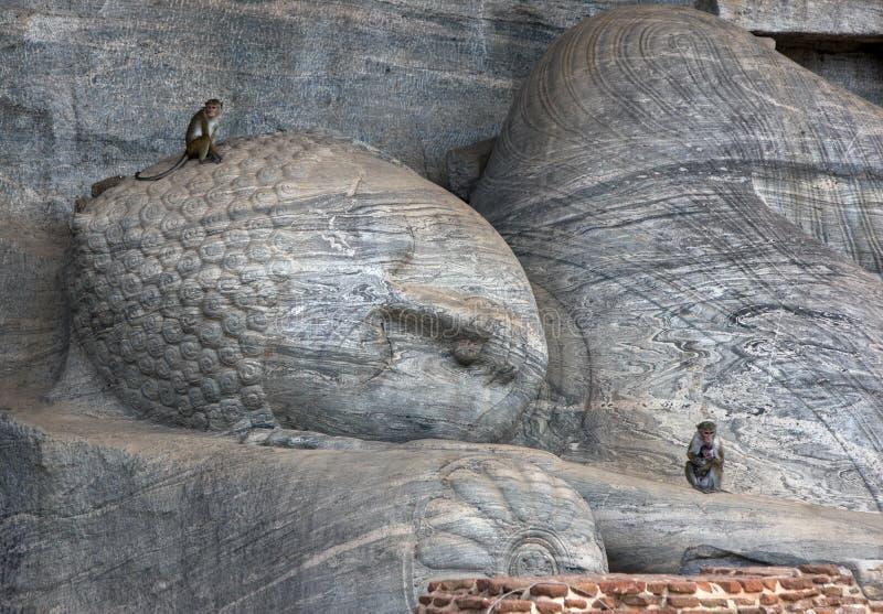 Toque de apen van Macaque zitten op Gal Vihara bij de oude plaats van Polonnaruwa in Sri Lanka stock foto