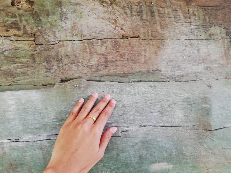 toque de mano en el árbol, Tailandia fotografía de archivo