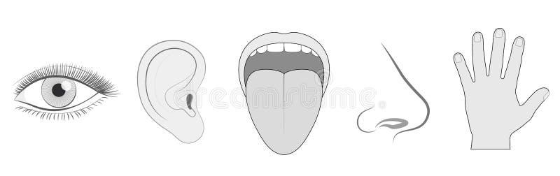 Toque do cheiro do gosto da audição da vista de cinco sentidos ilustração royalty free
