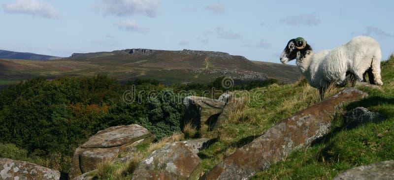Tor de Higger com um carneiro que olha para fora foto de stock royalty free