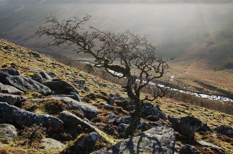 Tor preto Dartmoor fotos de stock