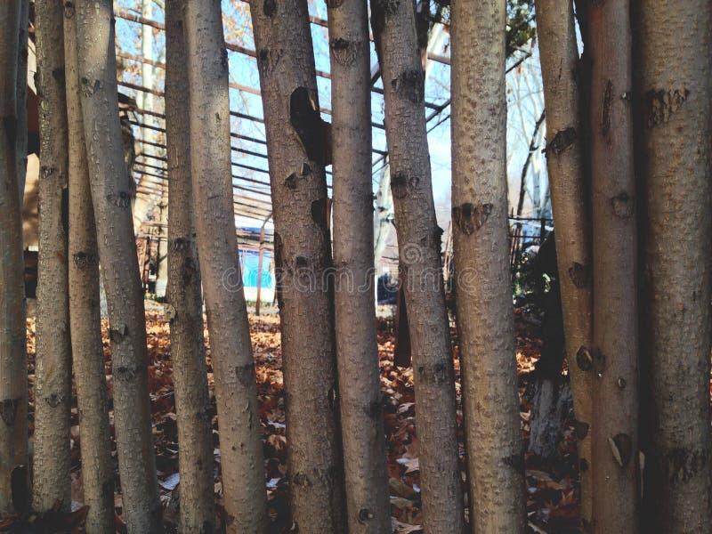 Tor von gehackten getrockneten Bäumen lizenzfreie stockfotos