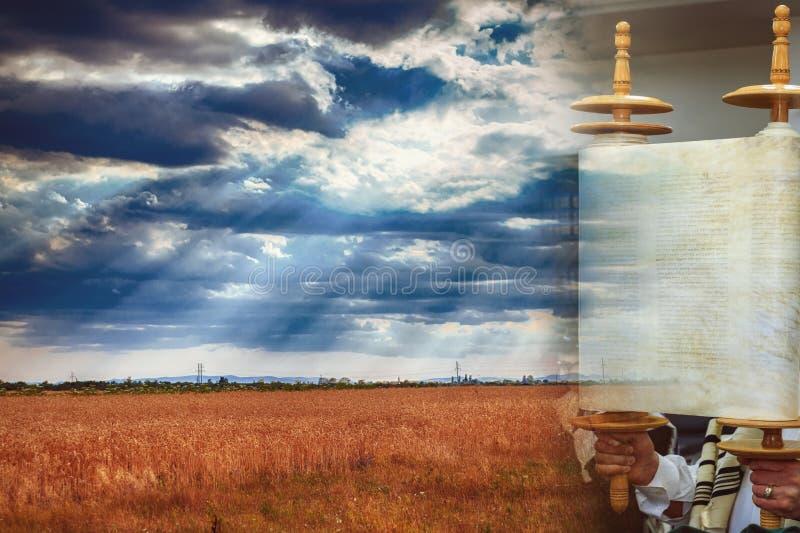 Torah-Rolle während des heiliger Tagweizenfeldes, Weizenhintergrund von Shavuot stockfotos