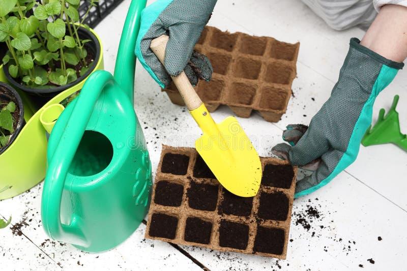 Torba del vaso, i raccolti naturali fotografia stock libera da diritti