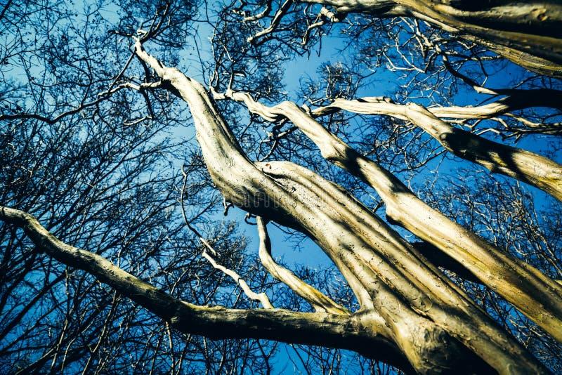 Torcendo cascas de árvore imagem de stock royalty free