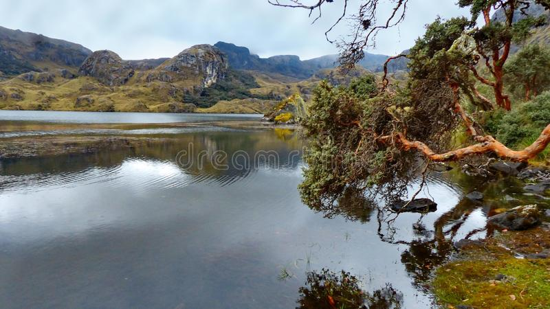 Cajas National Park, Toreadora lake, fallen paper trees royalty free stock photo