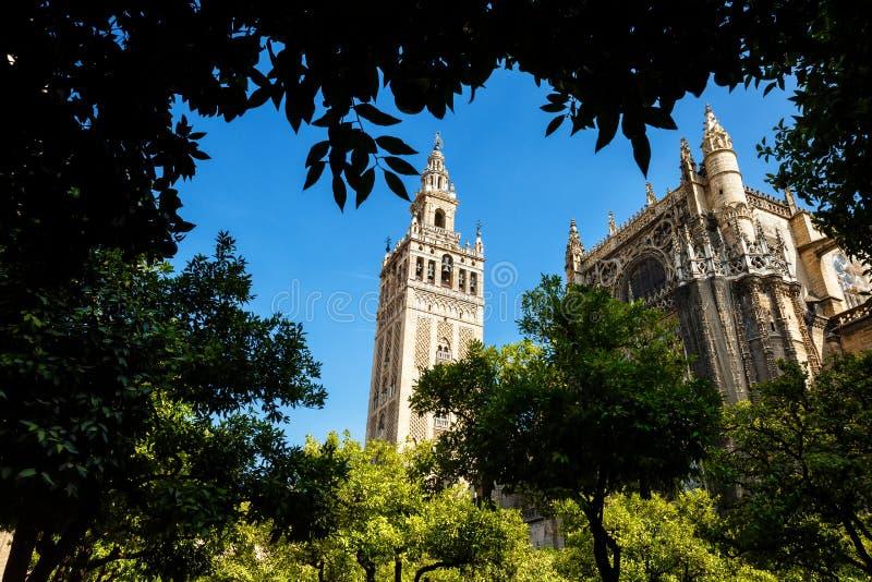 Toren Giralda door de bomen royalty-vrije stock afbeelding
