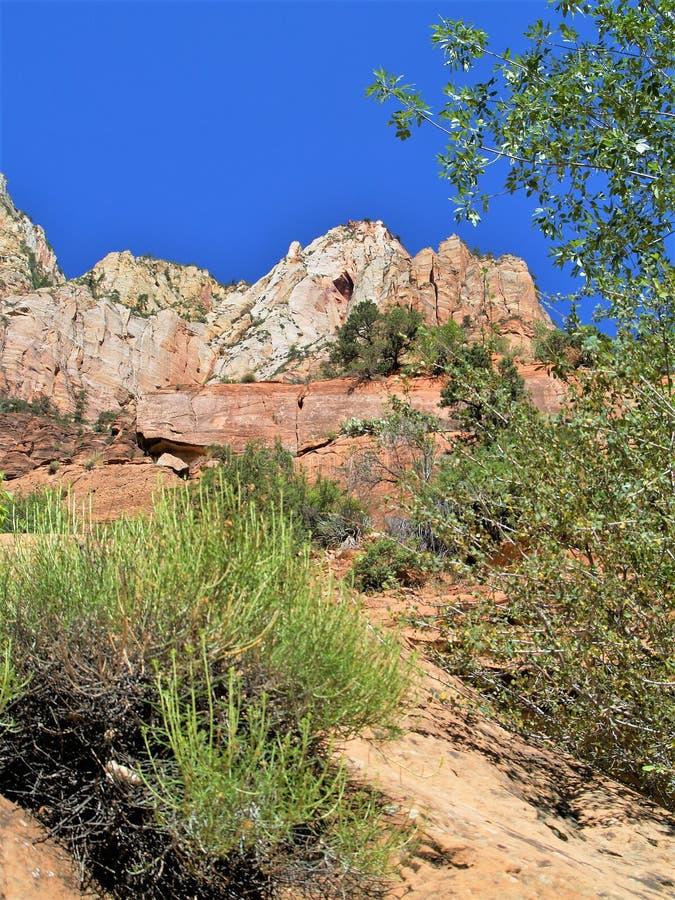 Torenhoge Monolieten in Zion National Park stock afbeelding