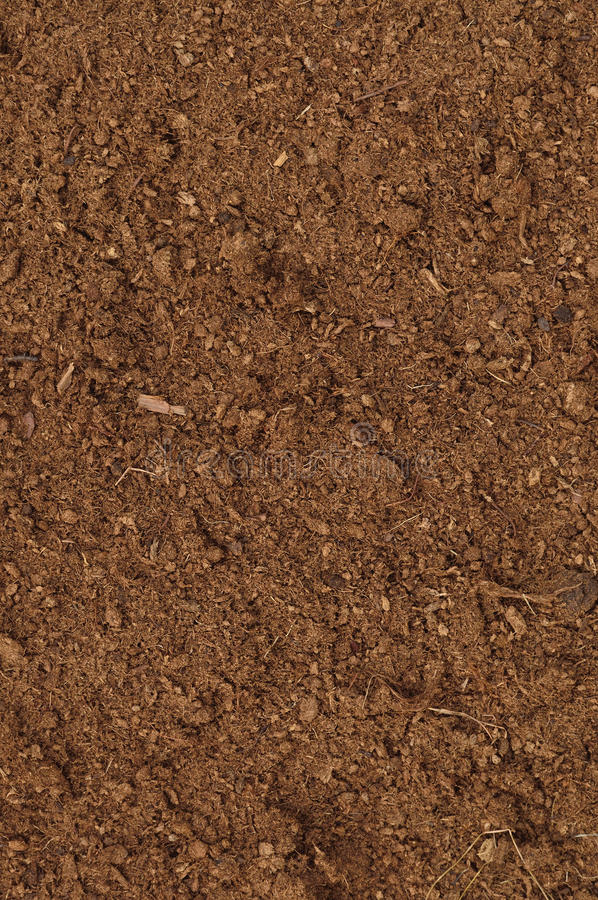 Torfowiskowej murawy Makro- zbliżenie, ampuła wyszczególniająca brown organicznie czarnoziem ziemia fotografia royalty free