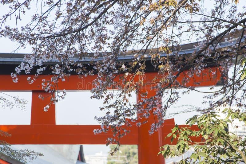 Torii на входе Fushimi Inari-Taisha в Киото во время Hanami стоковые изображения