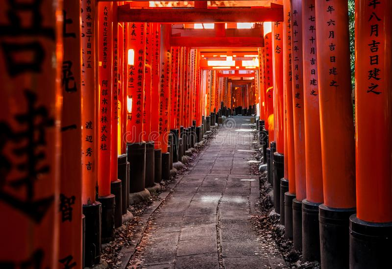 Torii на Fushimi Inari-taisha на заходе солнца осени с солнечным светом фильтруя через ворота и некоторый сор лист на сторонах стоковое фото rf