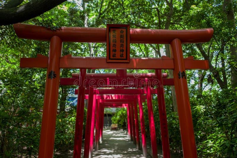 Torii in Fukuoka stock afbeeldingen