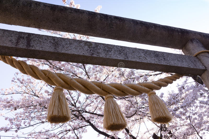 Torii Gate with Braided Rope. Concrete Torii gate with braided rope and tassels tied to the posts. Cherry trees in blossom and light blue sky are seen in the stock image