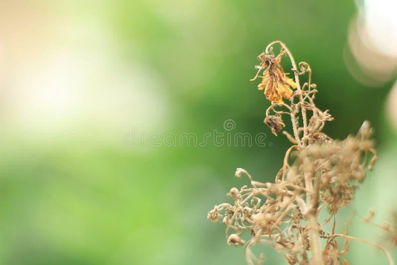 torka blommor royaltyfria foton