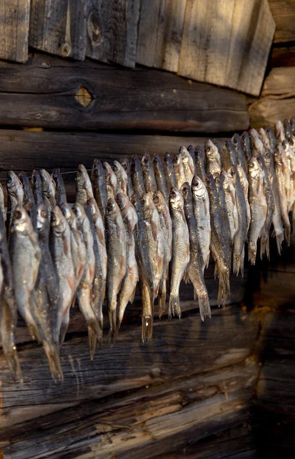 torka den saltade fisken arkivfoto