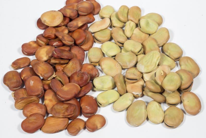 Torka frö av bondbönan från organiskt lantbruk, på vit royaltyfri foto
