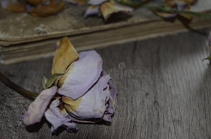 Torka rosa på trätabellen royaltyfri fotografi