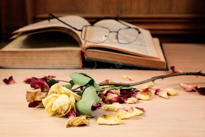 Torka rose och den gammala boken royaltyfri foto