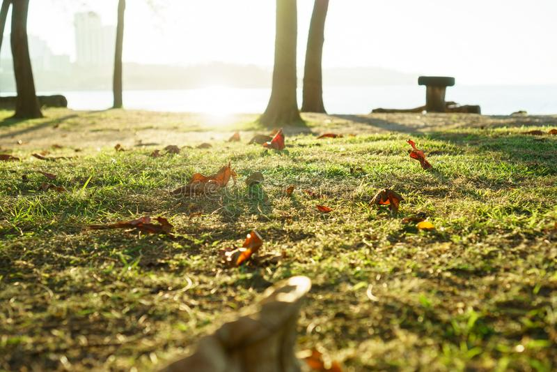 Torka sidor på fält på parkerar royaltyfri fotografi